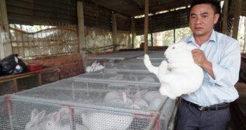Dũng cảm để thay đổi – anh kỹ sư trở thành ông chủ trang trại nuôi thỏ lai 3