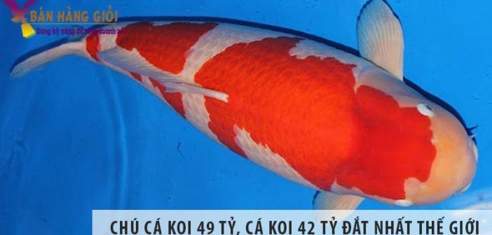Chiêm ngưỡng chú cá koi 49 tỷ, cá koi 42 tỷ đắt nhất thế giới